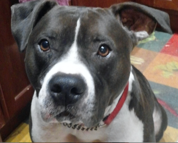 Adopt Dog West Chester Pa