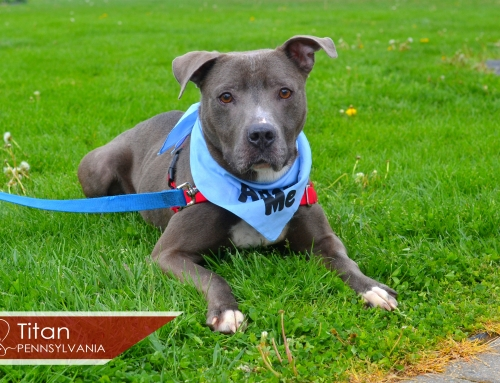 Featured Pet of the Week – May 3, 2016